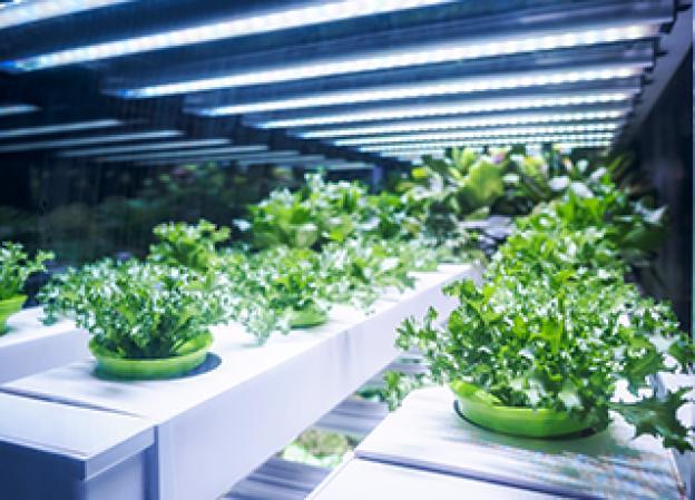 Pflanzenlampen: Pflanzen richtig überwintern mit der optimalen Beleuchtung