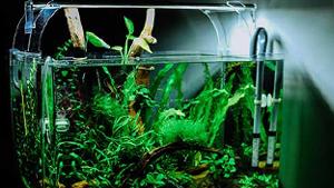 LED-Leuchte beleuchtet Aquarium