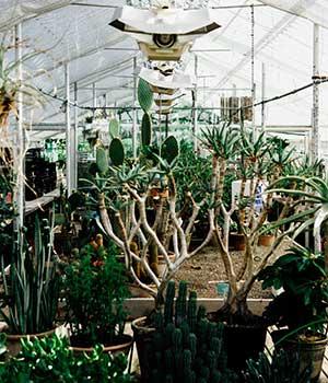 Kakteen in einem Gewächshaus mit Pflanzenlampen