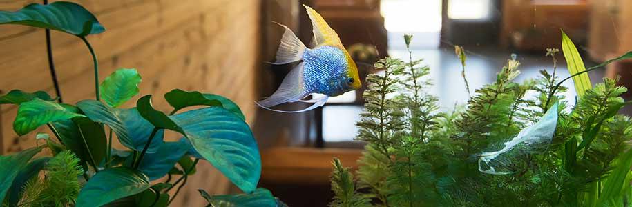 Fische im Aquarium mit Beleuchtung, im Hintergrund Wohnung mit viel Holz