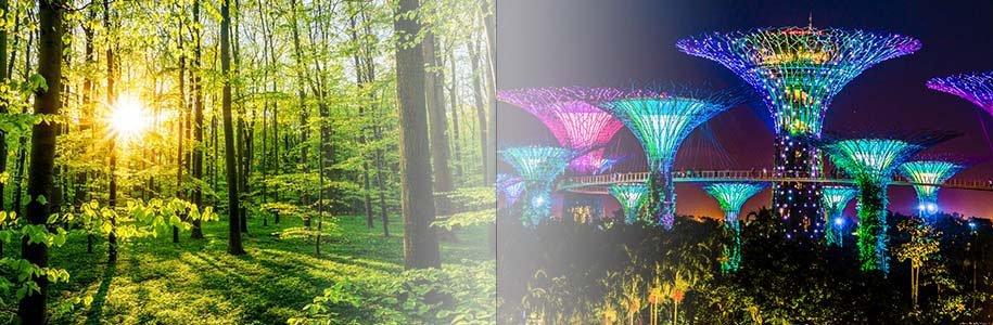 Licht im Wald und Gardens by the Bay beleuchtet