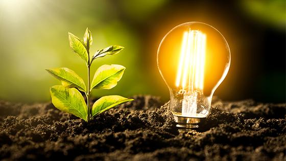 LED-Lampe neben Setzling in Erde